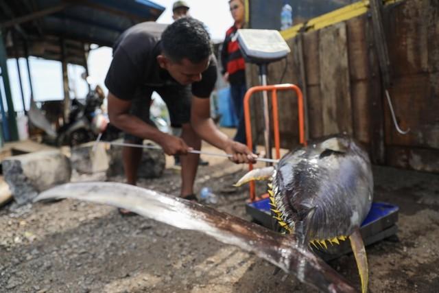 Foto: Melihat Tuna Tangkapan Nelayan Aceh yang Tembus Pasar Dunia (1056686)