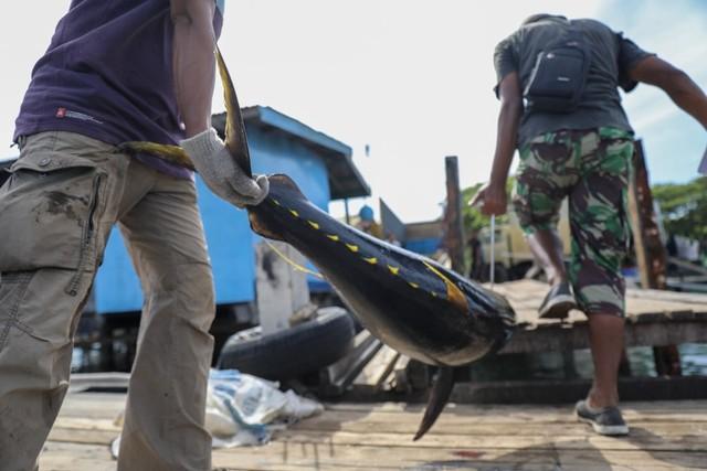 Foto: Melihat Tuna Tangkapan Nelayan Aceh yang Tembus Pasar Dunia (1056685)