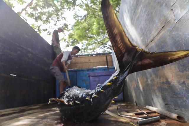 Foto: Melihat Tuna Tangkapan Nelayan Aceh yang Tembus Pasar Dunia (1056688)