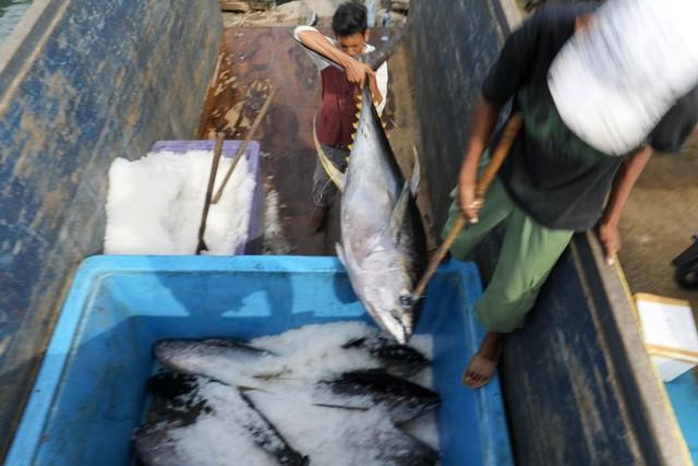 Foto: Melihat Tuna Tangkapan Nelayan Aceh yang Tembus Pasar Dunia (1056689)