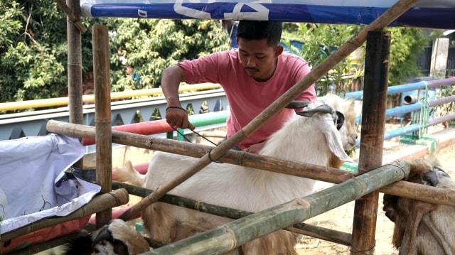 Pendeta di Batam Sumbang Hewan Kurban, Wali Kota: Jangan Diperdebatkan (300955)