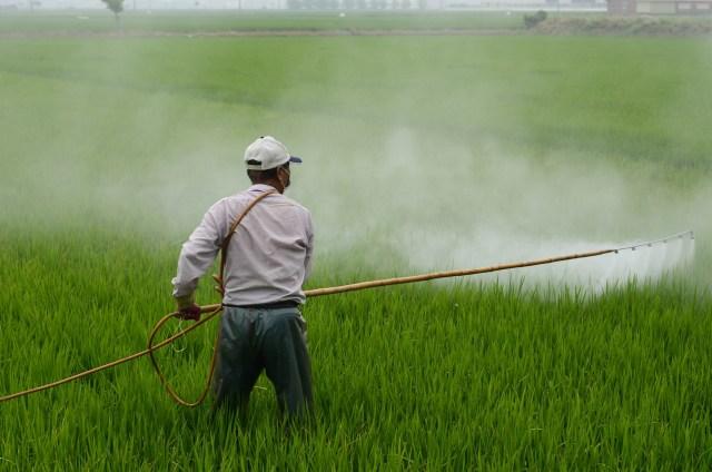 Tips Memilih Pestisida yang Tepat (1223581)