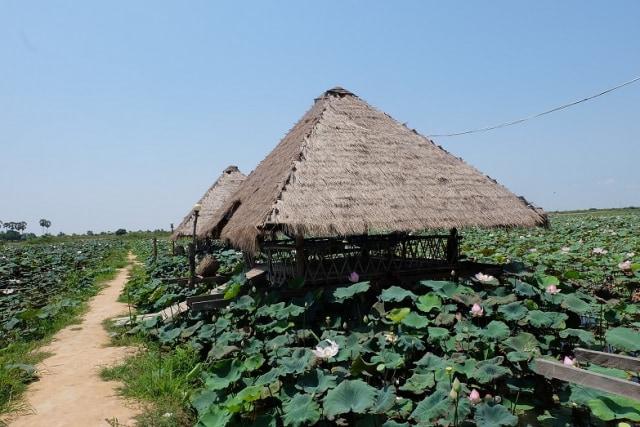 Sensasi Mencicipi Bunga Teratai, Camilan Khas Masyarakat Kamboja (306133)