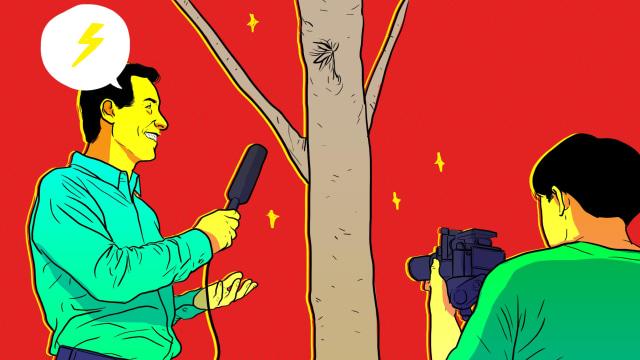 Wawancara Eksklusif (Sekaligus Fiktif) Pohon Sengon (82420)
