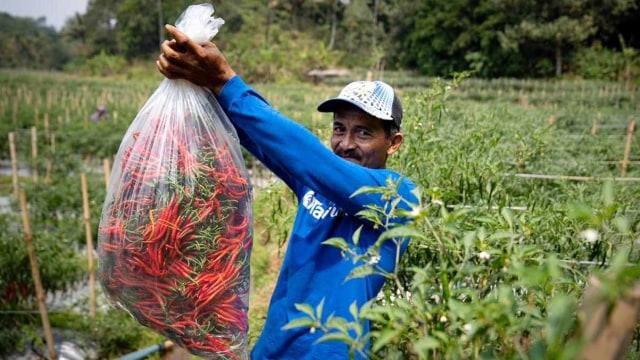 Daya Beli Petani dan Nelayan Kompak Naik di Agustus 2019 (207788)