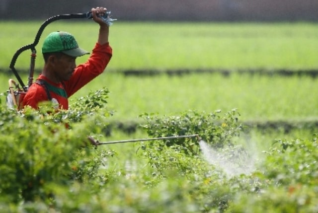 6 Cara Menggunakan Pestisida yang Biasa Dilakukan di Lapangan (9811)