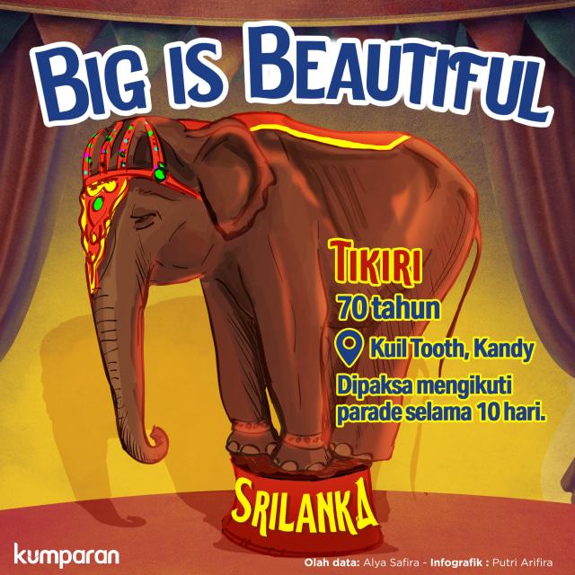 Tikiri, Gajah Kurus Kering yang Viral Itu, Mati (57868)