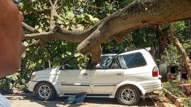 Mobil tertimpa pohon tumbang di Universitas Pancasila