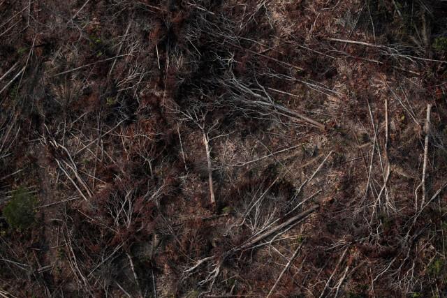 Kebakaran hutan Amazon (NOT COVER)