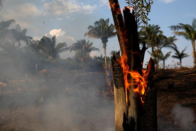 Brasil Tolak Bantuan G7 untuk Padamkan Kebakaran Hutan Amazon (438742)