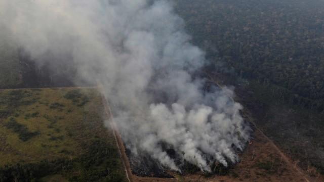 Leonardo DiCaprio Dituduh sebagai Dalang Kebakaran Hutan Amazon (1227436)