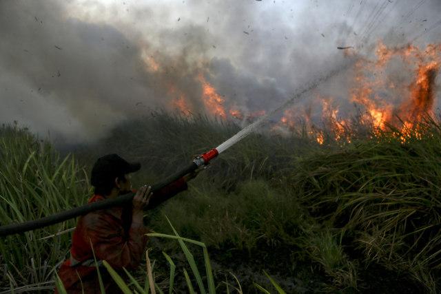 Walhi: Jokowi Ancam Copot Kapolda Tak Efektif Selesaikan Karhutla (73049)