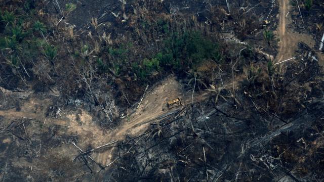 Leonardo DiCaprio Dituduh sebagai Dalang Kebakaran Hutan Amazon (1227435)