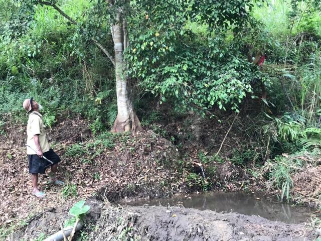 Mbah Sadiman, pria yang Tanam 11 ribu pohon di Lereng Gunung Lawu