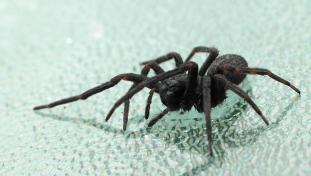 Mengapa Ada Manusia Takut dengan Laba-laba? (1)