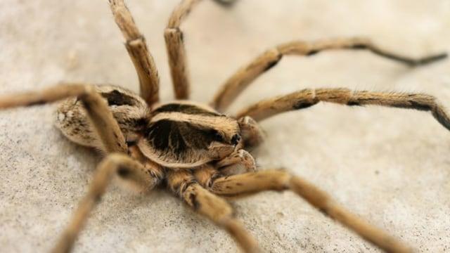 Pria Ini Ditangkap di Bandara Prancis karena Bawa Ratusan Laba-laba (12131)