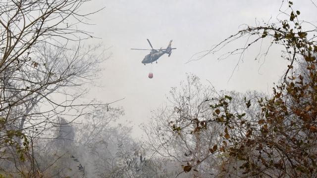Brasil Tolak Bantuan G7 untuk Padamkan Kebakaran Hutan Amazon (438740)