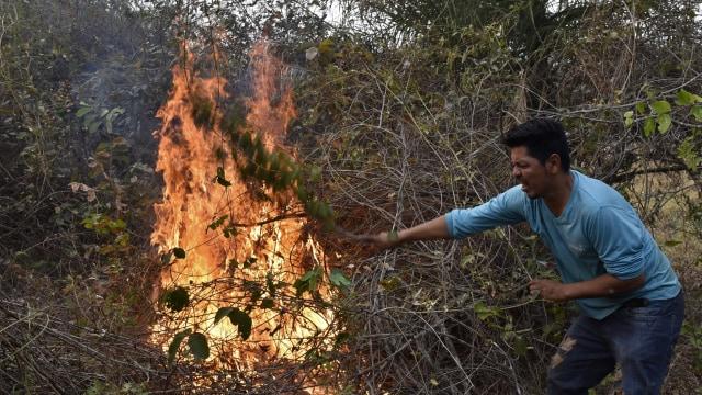 Brasil Terima Bantuan Uang G7 untuk Padamkan Kebakaran Hutan Amazon (436820)