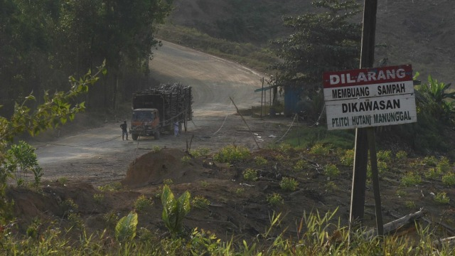 LIPSUS Halo Ibu Kota Baru, Lahan Hutan Tanaman Industri