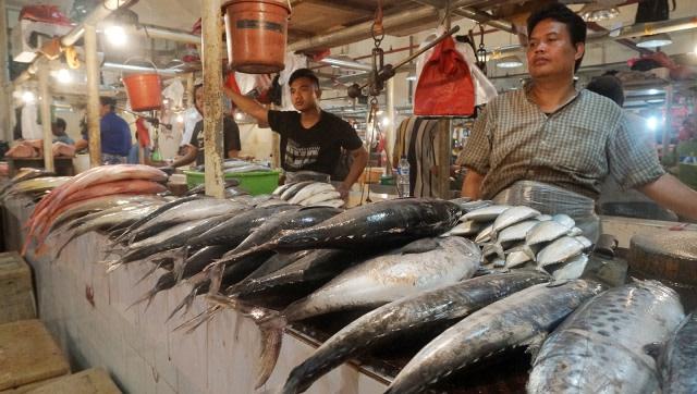 Budaya Makan Ikan di Yogyakarta Dinilai Masih Rendah (8064)