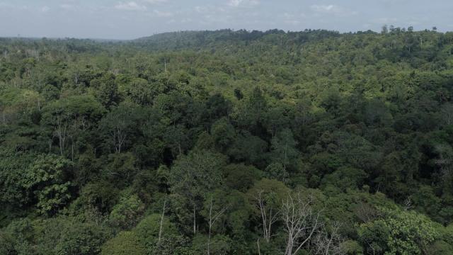 Poin-poin UU Cipta Kerja yang Dikhawatirkan Investor Global Rusak Lingkungan