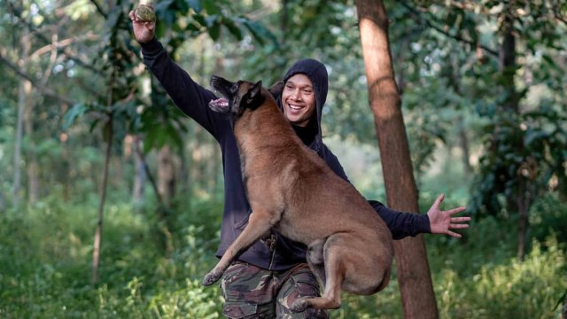 Sparta, Anjing Bima Aryo, Mati karena Komplikasi Penyakit (443632)
