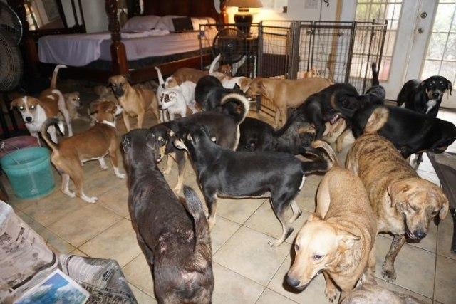 Akibat Badai Dorian, Perempuan Ini Tampung 97 Anjing Liar di Rumahnya (17442)
