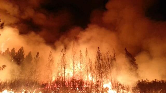 Fakta di Balik Tragedi Kebakaran Hutan Amazon (61189)