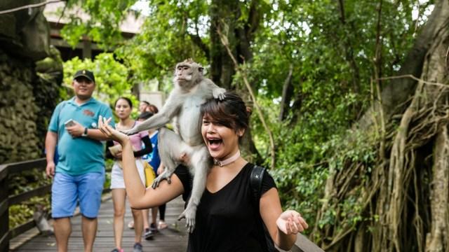 Wisatawan berfoto bersama monyet di Monkey Forest Ubud, Bali
