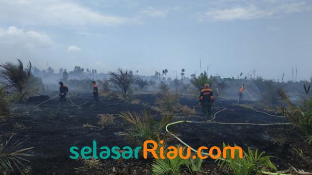 Seorang Kakek di Riau Tewas Saat Padamkan Api di Kebunnya (966769)