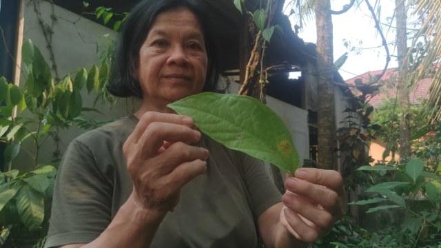 Sengkubak, Daun Spesial Berkhasiat Bagi Kesehatan (449602)