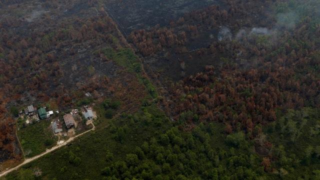 Foto: Kabut Asap Akibat Kebakaran Hutan Kepung Palangka Raya (72862)