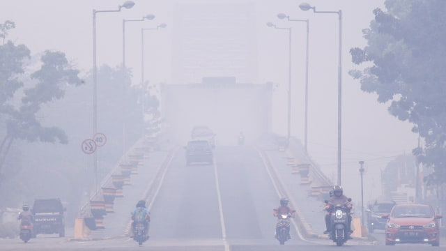 37 Orang Utan di Palangka Raya Terkena ISPA Akibat Kabut Asap (390513)