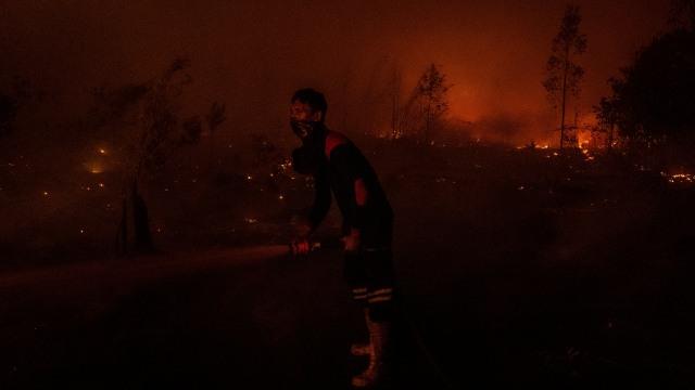 Lahan Gambut di Kaki Gunung Pangrango Terbakar (17606)