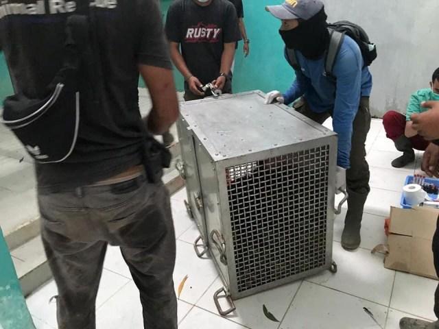 Dua Orang Utan Korban Karhutla di Kalimantan Barat Dievakuasi (7591)