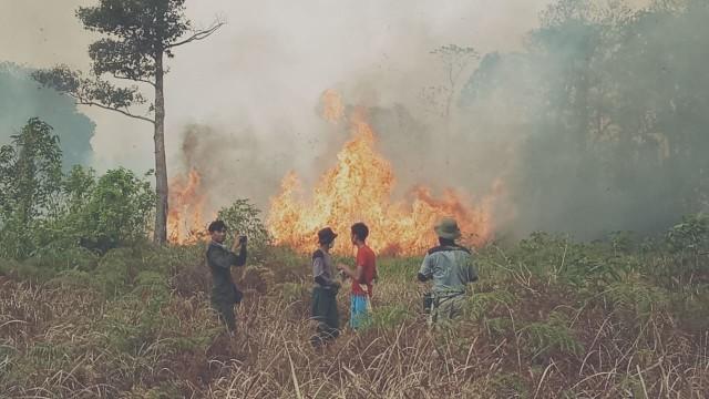 Kawasan Taman Nasional Tanjung Puting yang terdampak Karhutla
