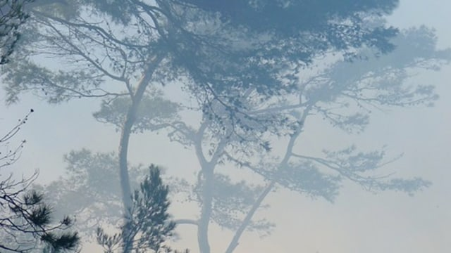 Kabut Asap Kian Pekat, BPBD Sijunjung: ISPU Masih 123, Belum Berbahaya (110129)
