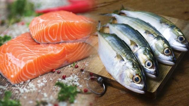 Ilustrasi Ikan Salmon dan Ikan Kembung