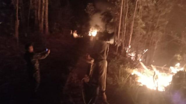 Dalam Sebulan, 5 Kali Terjadi Karhutla di Sulawesi Tengah (40195)