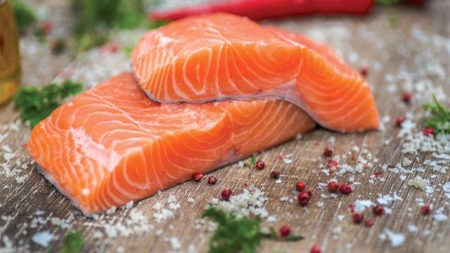 Ilustrasi ikan salmon