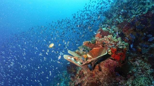 Ini 5 Surga Wisata Bawah Laut di Pulau Sulawesi, Mana Favoritmu? (96443)