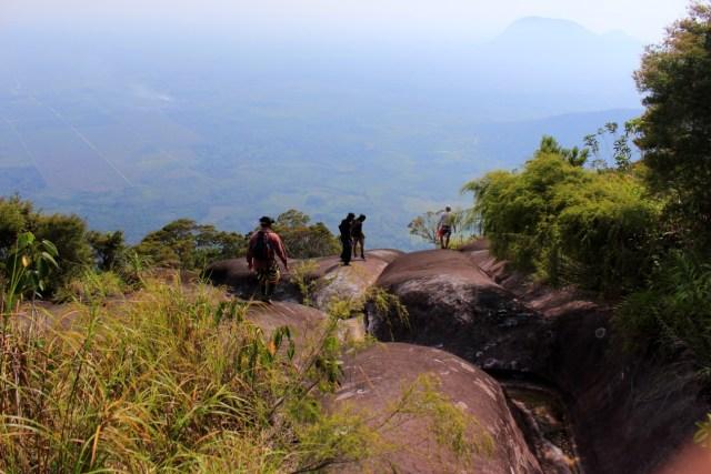 Populasi Kantong Semar Langka di Gunung Kelam Kritis karena Diburu (244110)