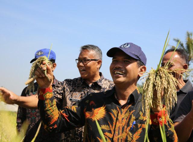Pantauan Kementan di Berbagai Daerah, Harga Gabah Melorot (325992)