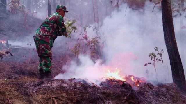 1 Hektare Lahan Hutan di Bantarkawung, Brebes, Terbakar (734883)