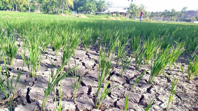 Warga di Perbatasan Manado-Minut Kesulitan Dapatkan Air Bersih (669824)
