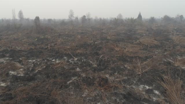 LIPSUS, DARURAT ASAP,  Asap karhutla di Riau.
