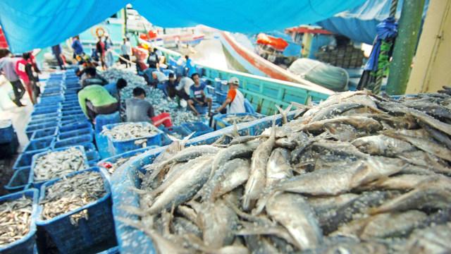nelayan memilih ikan
