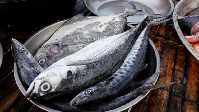 Pedagang di Kuwait Sisipkan Mata Palsu pada Ikan agar Terlihat Segar (125403)