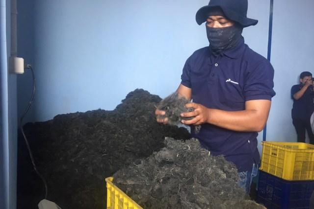 Pengemasan rumput laut kering di gudang milik Koperasi Mina Agar Makmur di Desa Sedari, Kabupaten Karawang, Jawa Barat