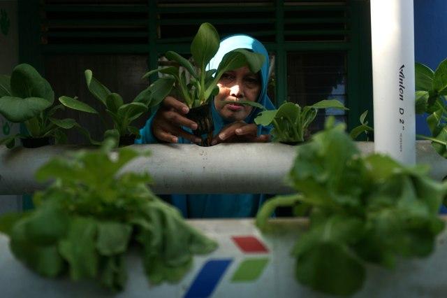 Bisa Jadi Hobi Baru, 7 Sayuran dan Rempah yang Dapat Ditanam Ulang di Rumah (311397)
